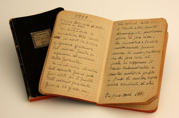 campagna olivicola  Turri 1929