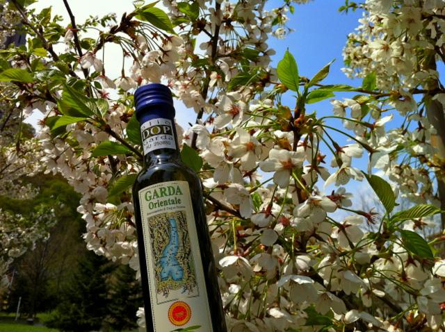 Cherry tree (JP)