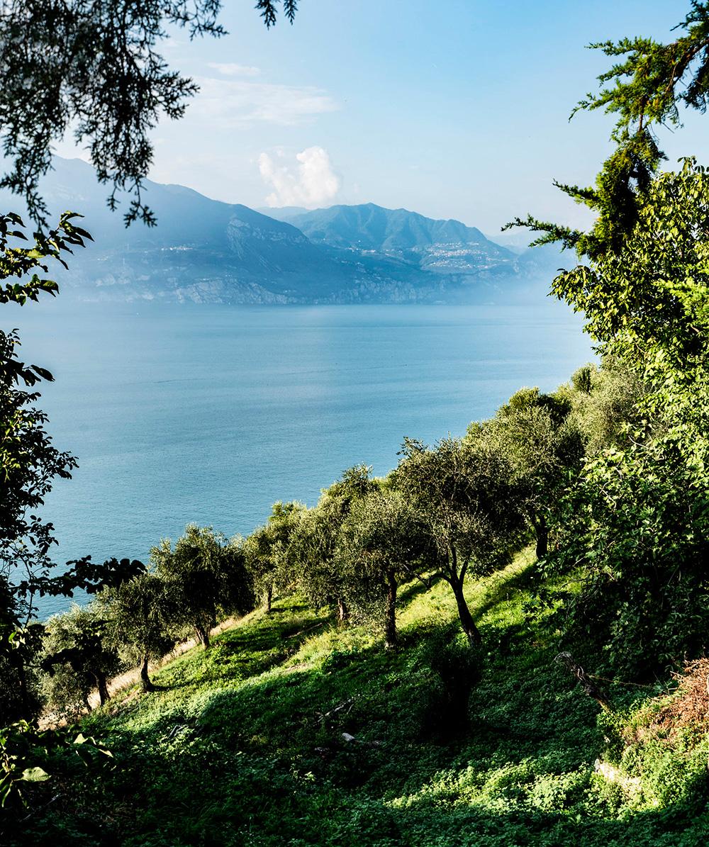 Olioturismo, viaggiare per conoscere l'olio extravergine d'oliva