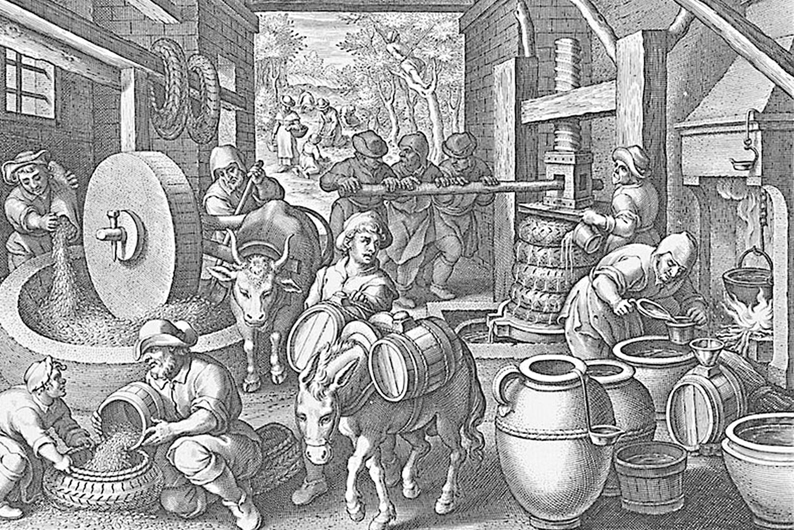 Olio ed olivi del Garda veronese