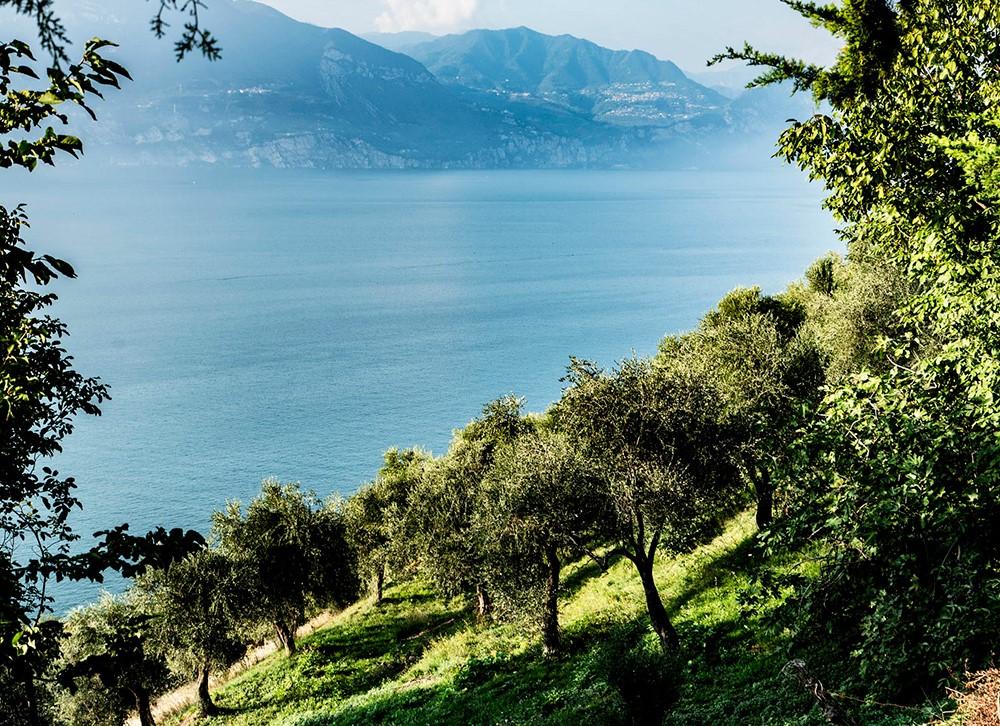 olioturismo sul Lago di Garda