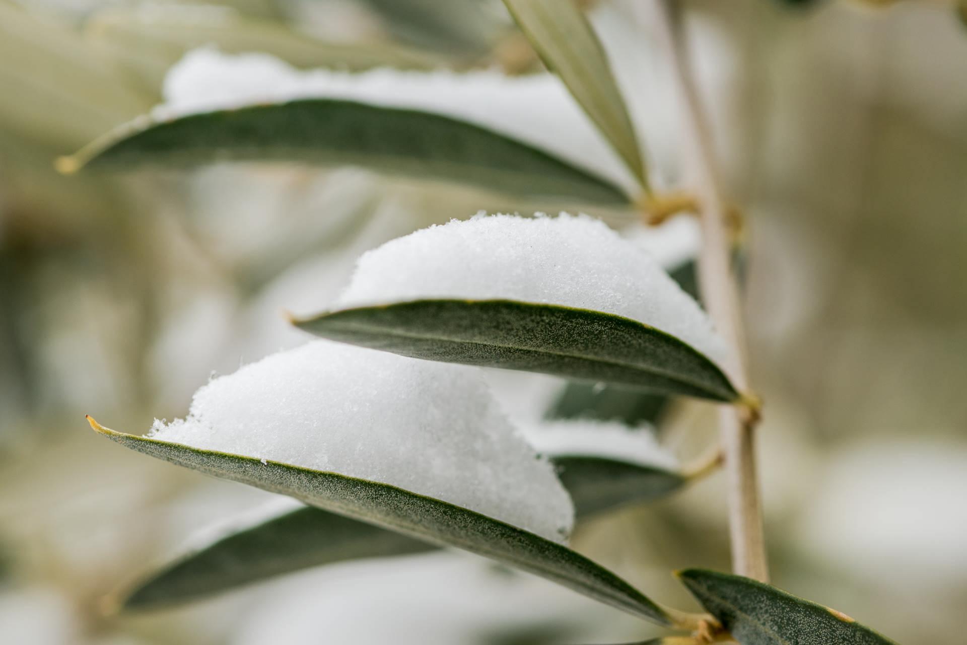 olio extravergine d'oliva natale