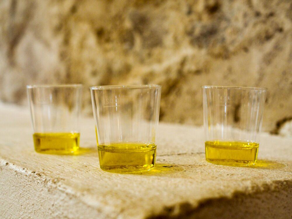 degustazione olio turri